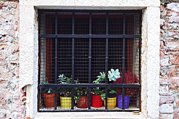Venice again. I love the energy that the small plants have to the street Window Architecture Building Exterior Built Structure No People Flower Day Window Box Plant Outdoors Curtain Multi Colored Security Bar Succulents Succulent Plant Flower Pot Venice EyeEmNewHere EyeEmNewHere Let's Go. Together. Sommergefühle