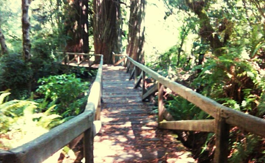 Redwood Hiking Hikingadventures Hiking Trail RedwoodRegionalPark Nature In The Forest Forest Path Bridge Beautiful Nature