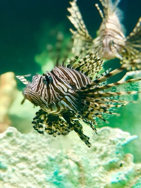 Bloop EyeEmNewHere Animals In The Wild Animal Wildlife Animal Themes Animal One Animal Close-up Focus On Foreground Invertebrate Nature Beauty In Nature No People Animal Markings Outdoors Selective Focus Underwater Water Sea Life