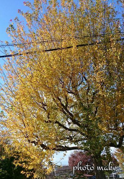 今日は風がビュー ビューと強くて落ち葉がクルクルと舞っていました。 枯葉 舞う Kyoto