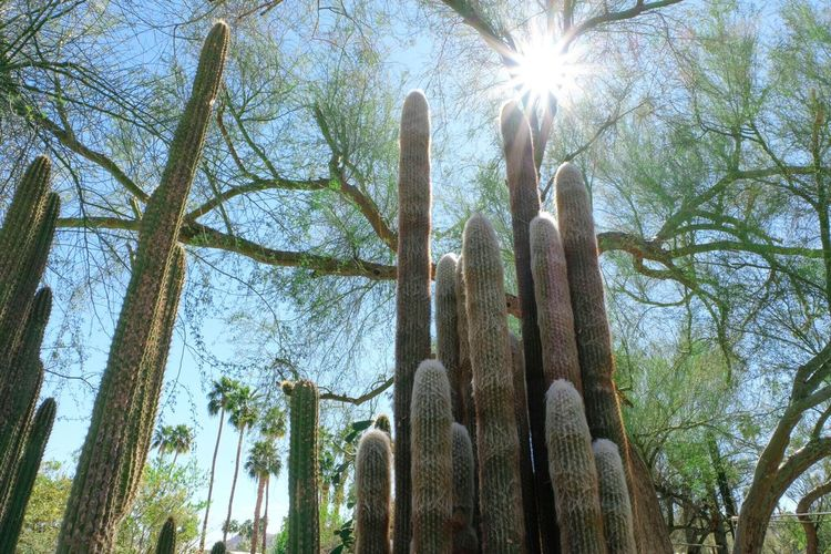 Cactus garden in sunshine Sunbeam Nature Growth Lens Flare Sun Low Angle View Cactus Sunlight Day Beauty In Nature