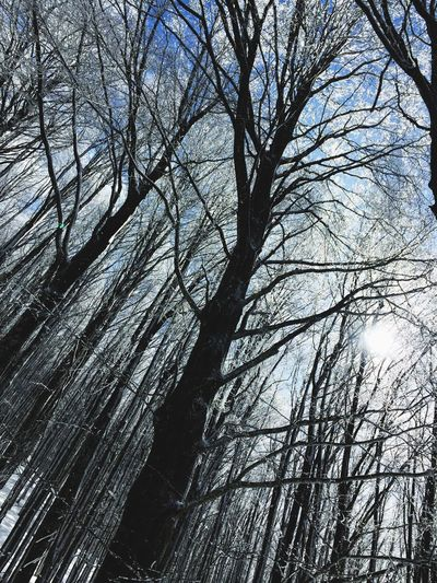 Snow ❄ Tree Branch Low Angle View Backgrounds Nature Beauty In Nature Full Frame Day Sky Outdoors No People