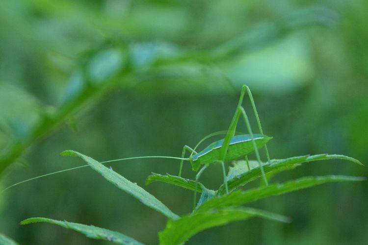 NEM Green