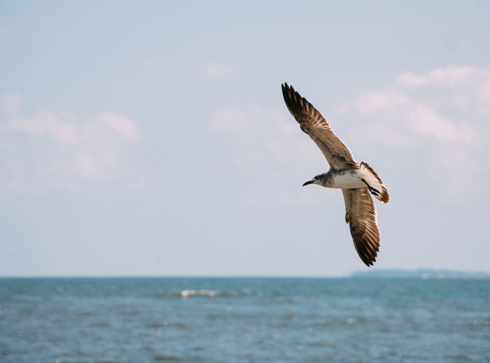 Animal Wildlife Animals In The Wild Sea Flying Animal Themes Animal Bird Water Sky Spread Wings Horizon Over Water Horizon One Animal Mid-air Motion Nature No People Outdoors Ocean Ocean Photography Mexico