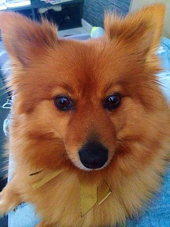 Coleen Selfiedog I Love My Dog Puppy Cute Popular Photos IPhoneography Pets Weekend Colors Eye4photography