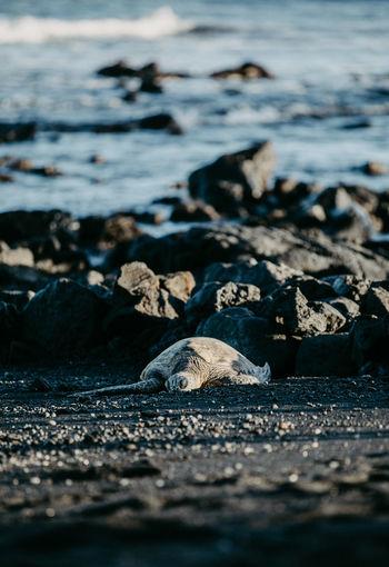 Surface level of tortoise on beach