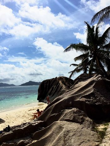 Animal Themes Sky Sea Beach Palm Tree Beauty In Nature Sand Water Tree Day Swimming