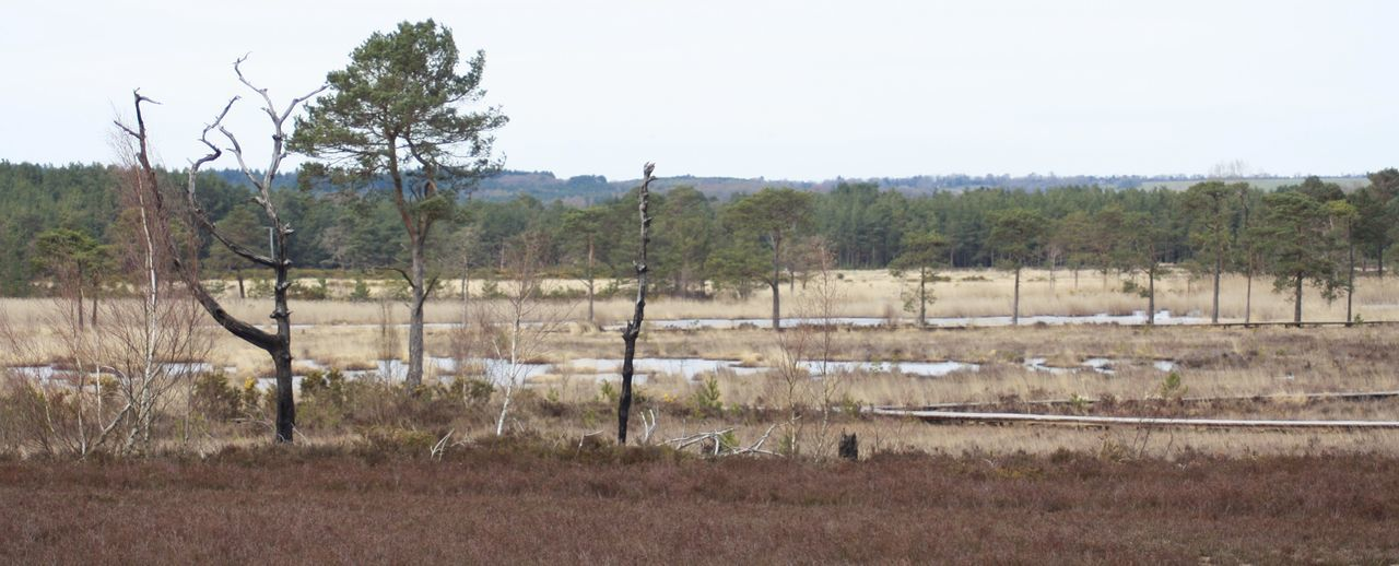 Beautiful Nature Beauty In Nature Dead Tree Heathland  Natures Beauty Scenery Sunbleached Tranquil Scene