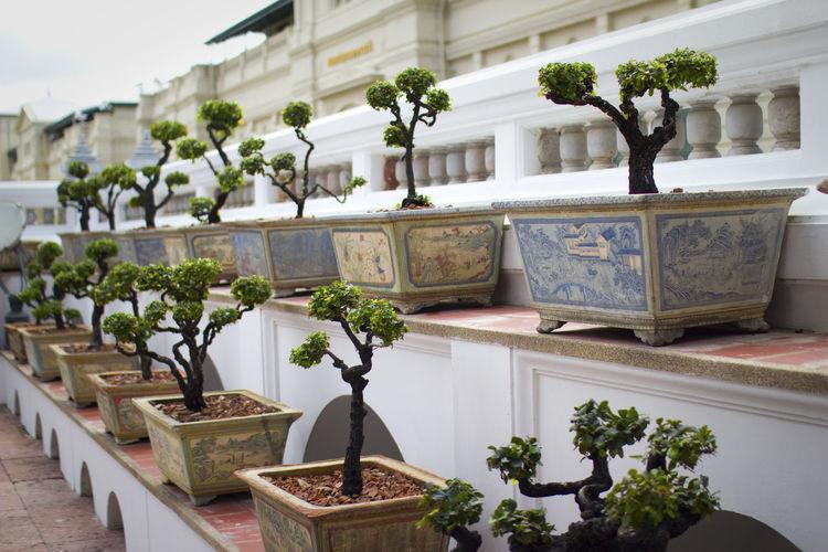 Bonsai trees in garden