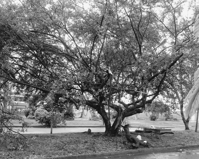 Streetphoto Taking Photos Nature Tree Branches Blackandwhite Hard Rain Nature Photography