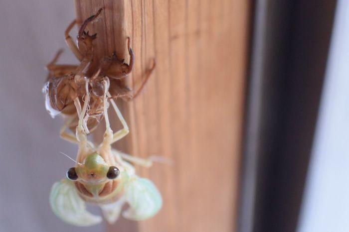 5:28 NOW ‼︎ Nature Summer Cicada 蝉 Taking Photos