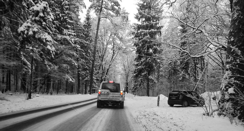 Shades Of Winter Brake Lights Car Cold Temperature Day Land Vehicle Mode Of Transport Nature No People Outdoors Road Snow Transportation Tree Weather Winter