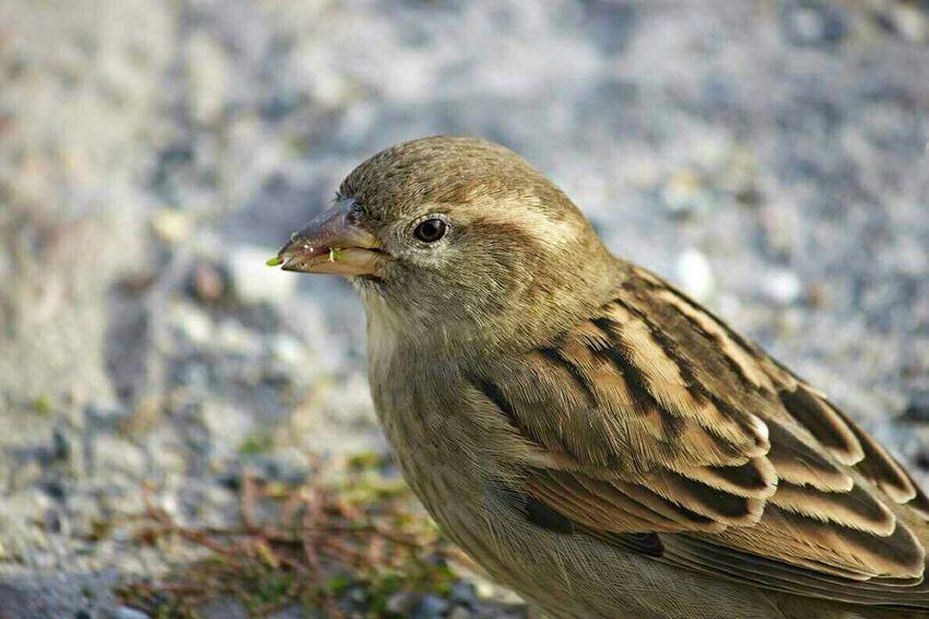 Little Bird Bird Photography Birdwatching Urban Birds