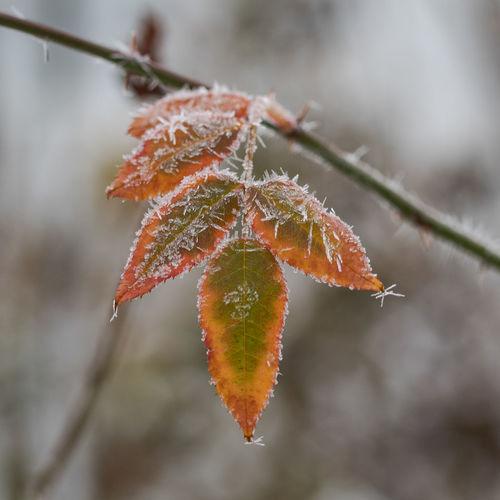 Close-up of orange leaf on snow