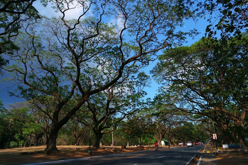 One saturday afternoon 👣 Up Diliman Campus Sky And Trees Hidden Moon Sky Porn TreePorn Walking Around Walking Around Taking Pictures
