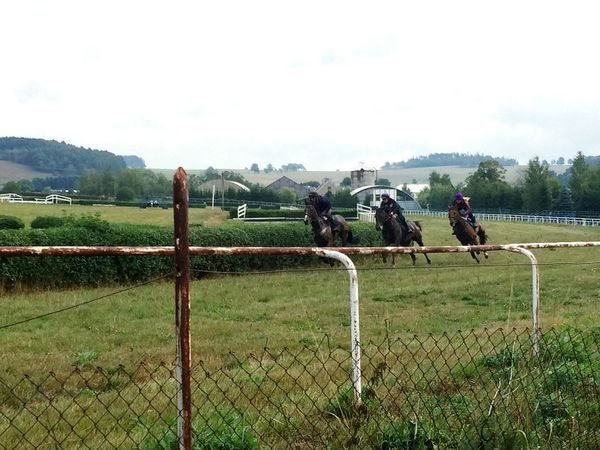 Fence Protection Soccer Field Horizontal People Outdoors Day Sky Adult Horses Horseraceing Practice