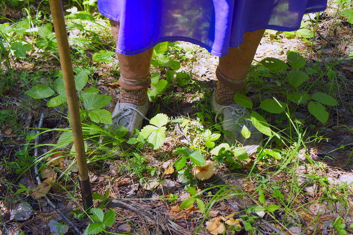feet of elderly woman with his crutch against a background of grass in summer Age Elderly Footwear Grass Ground Human Foot Leg Life Lifestyles Loss Low Section Old Orthopedics Outdoors Part Of Person Plant Poor  Shoes Showcase July Waddle Waiting Walking Way People And Places Traveling Home For The Holidays Finding New Frontiers An Eye For Travel
