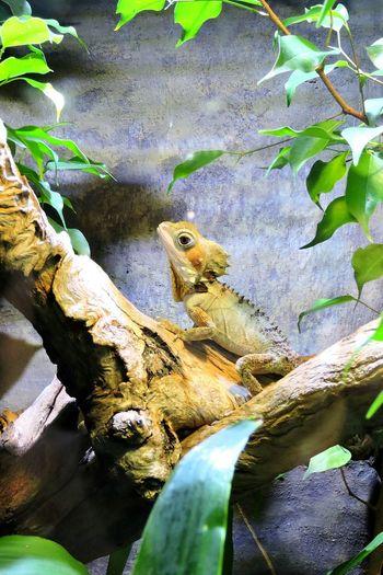 Cute Animals Cute Lizard Cuteness Nature Pretty Creatures Zoo