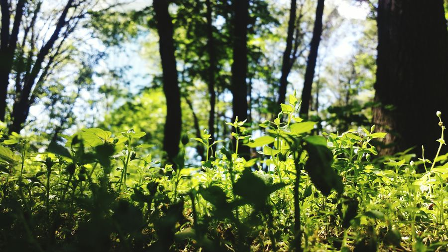 Nature On Your Doorstep Mini-jungle