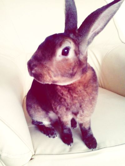 Leo Animals AnimaLs <3 Bunny  Bunnys Cute Animals