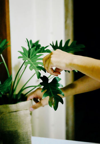 Cropped hands touching potted plant at home