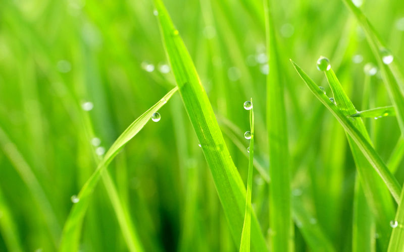 gorgeous green grass with water drops in the morning, photographed at close range Garden, Backgrounds Beauty In Nature Close-up Day Drop Field Foliage Fragility Freshness Grass Green Color Growth Macro, Nature No People Outdoors Plant Selective Focus Water Wet First Eyeem Photo