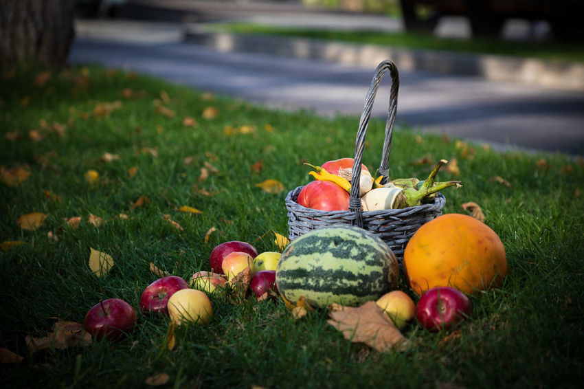 Autumn is coming...🍃🍁🍃 EyeEmSelect WeekOnEyeEm Apple - Fruit Autumn Day Field Food Freshness Fruit Grass Healthy Eating Plant Selective Focus Vegetable