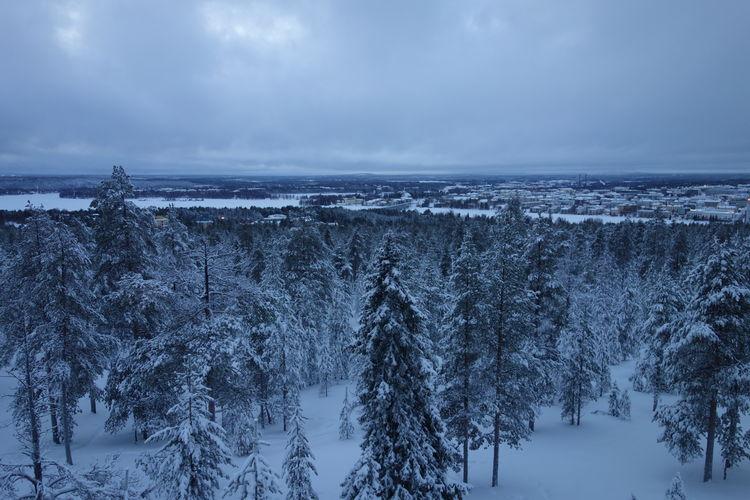 Tree Cold Forest Landscape Nature No People Scenics Snow Snow Forest Winter Winterwonderland