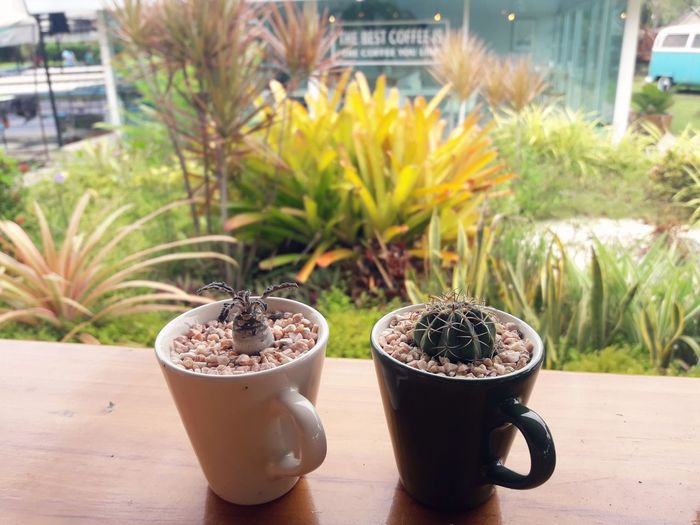 Close-up of succulent plants in mug on table