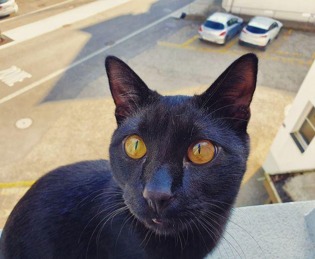 my cat Jackson