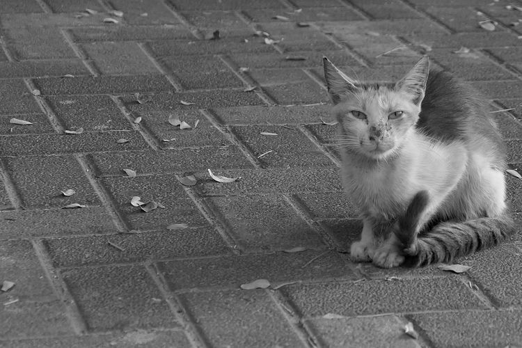 Homeless Loneliness City Street Photography Autumn Leaves Autumn Cat Pets Feline Domestic Domestic Cat Mammal Domestic Animals One Animal Portrait Looking At Camera No People Sitting Day Relaxation