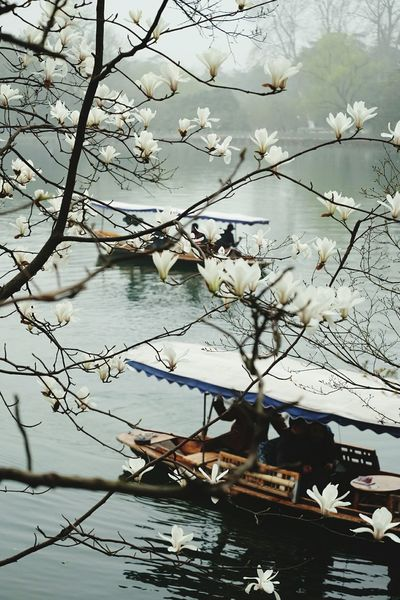 EyeEm Best Shots - Nature West Lake NATReview White Flowers Yulan Lake View Spring Is Coming  Spring Flowers Relaxing From My Point Of View