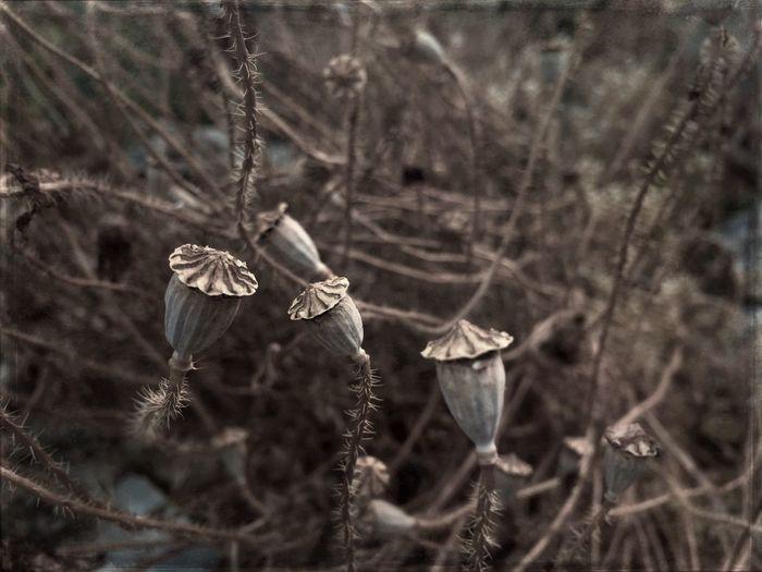 Nature Plants Flowers Dry Flower  Day Close-up Gray Maximum Closeness