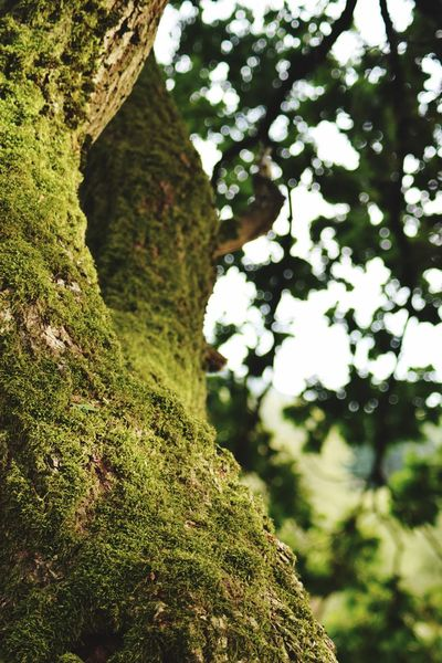 Moos Plant Tree Growth Green Color Nature Day No People Focus On Foreground Beauty In Nature Tranquility Close-up Outdoors Moss Trunk Tree Trunk Forest