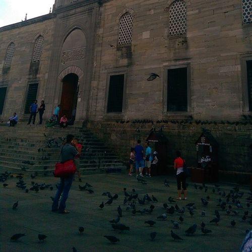 Bahcede kuslar... Bird Animal Pigeon Guvercin istanbul eminonu yenicamii newmosque fatih mosque cami ramadan ramazan architech mimari