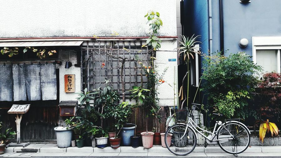 Always Be Cozy Street Photography Tokyo Tokyo Street Photography Japan Japan Photography Traditional House Japanese Architecture Bicycle Bycicle Lovers Cozy Place Cozy House Local Life Mandarin Tree Minimalistic EyeEm Best Shots See The World Through My Eyes Traveling Exploring New Ground Traveling In Japan Architecture Building Exterior Traditional Architecture