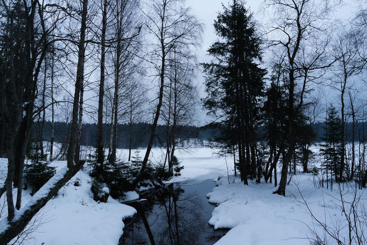 SOGNSVANN 3/3 Sognsvann Oslo Norway Europe Trees Snow Winter Stream Landscape Outdoors