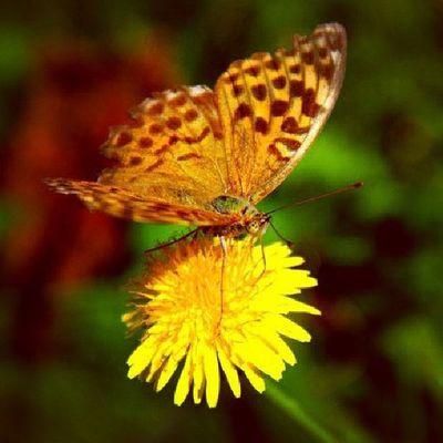Doğa Dogal Arşiv çiçek kelebekgüzellik?