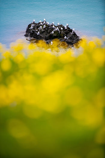 Beautiful seagulls sitting on cliff in Olafsvik ,iceland. Iceland Nature Seagulls Terquoise Bokeh Flower Icelandic Ocean Scenics Sea Sea Bird Seagull Wilderness Yellow