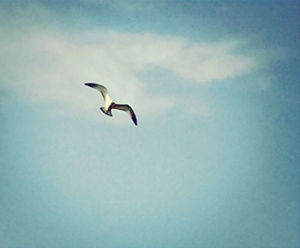 Birds In Flight Birds Of EyeEm  The Calmness Within Awesome!