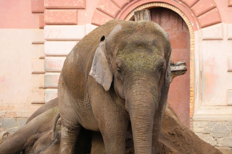 Close-up of elephant against wall