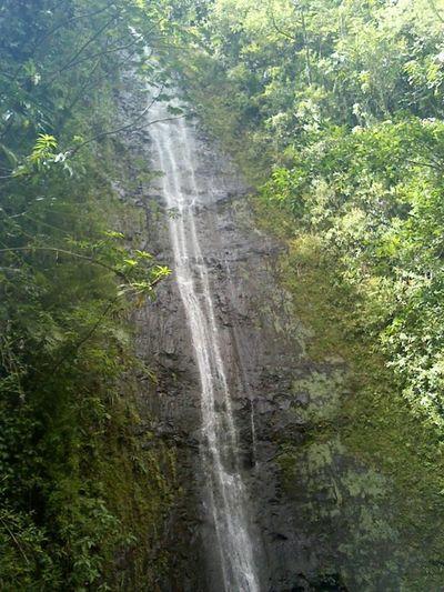 Firstpost  First Eyeem Photo FirstEyeEmPic Hike Waterfall Hawaii Oahu Manoa Falls Original Unedited Rawpic First Eyeem Photo Honolulu  Nature Beauty Beauty In Nature Beautiful Nature