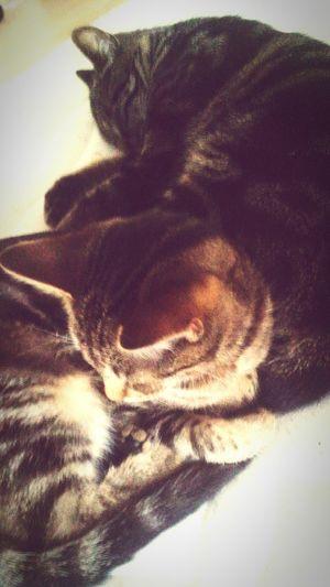 Cats 🐱 Catlover❤❤❤ Minka😻 Kitty Love♡ Mybabys Cute Kids Sweetgirls Sleeptime😴 Sleepy Young Animal Animals Photos Pets Cuteness ❥ 😍😌😊