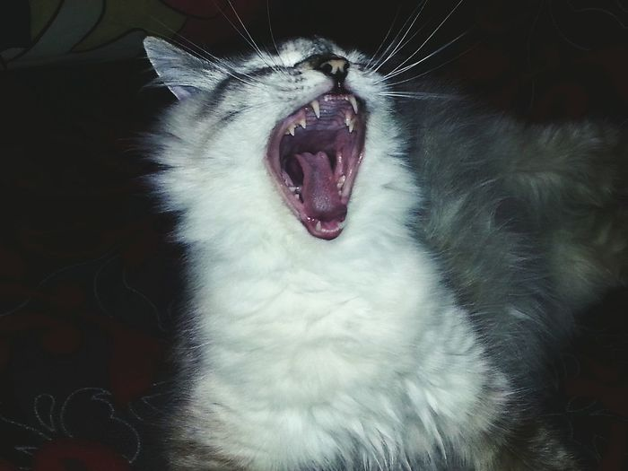 Cat♡ FUNNY ANIMALS Funny Moments Smile Happy :) Smartphonephotography Animal Photography Eyem Cute Cats