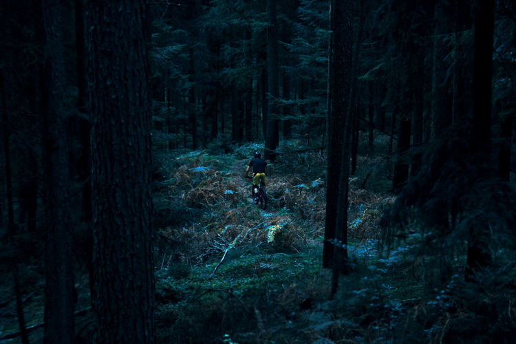 High angle view of mountain biker in the forest
