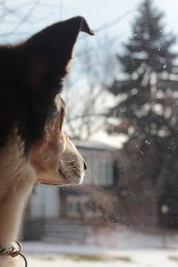 Animal Body Part Animal Hair Animal Head  Animal Themes Close-up Day Dog Domestic Animals Focus On Foreground Idyllic Looking Out Of The Window Mammal Nature No People Outdoors Part Of Pets Selective Focus Whisker