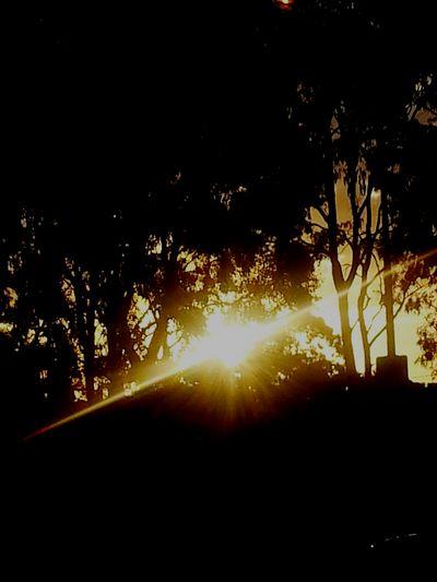 Night Sun ♥