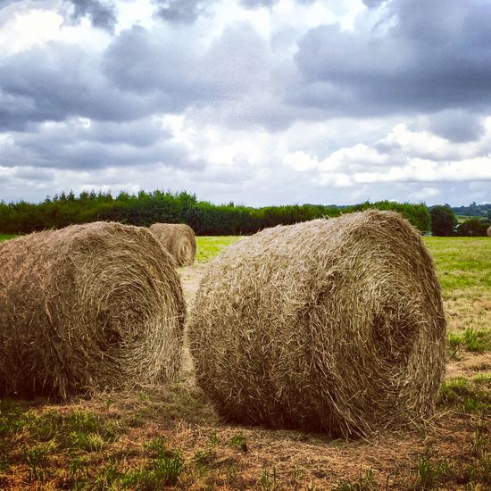 Agriculture Bale  Beauty In Nature Cloud - Sky Day Farm Field Grass Harvesting Hay Hay Bale Haystack Landscape Mammal Nature No People Outdoors Rolled Up Rural Scene Scenics Sky Straw Tranquil Scene Tranquility