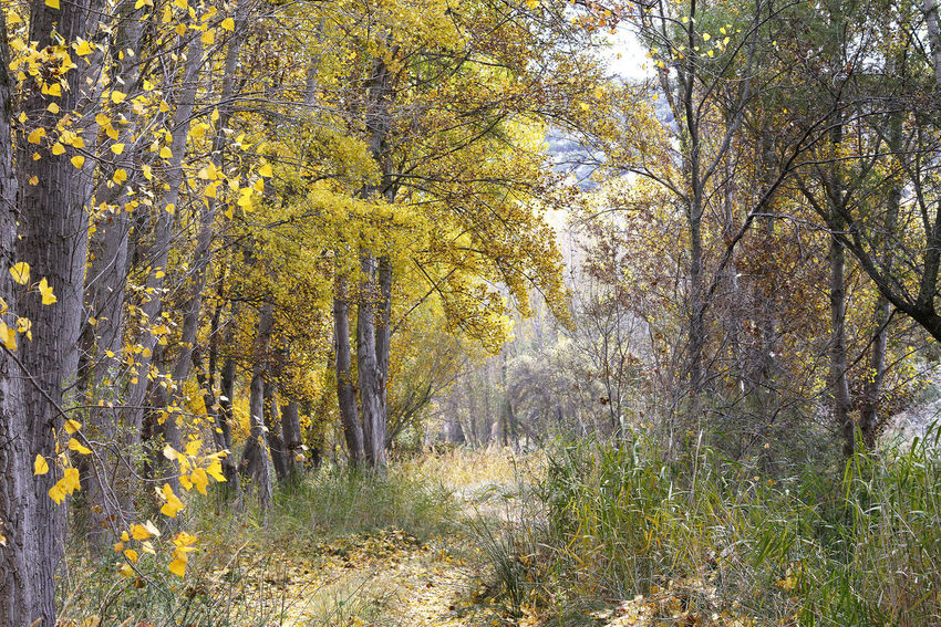 Autumn path Tree Plant Autumn Beauty In Nature Land Tranquility Growth Nature Day Yellow Forest Landscape Field Environment Autumn Collection Wood Beautuful Melancholia Meditation Peace Tranquility No People Way Path Guadalajara, Spain
