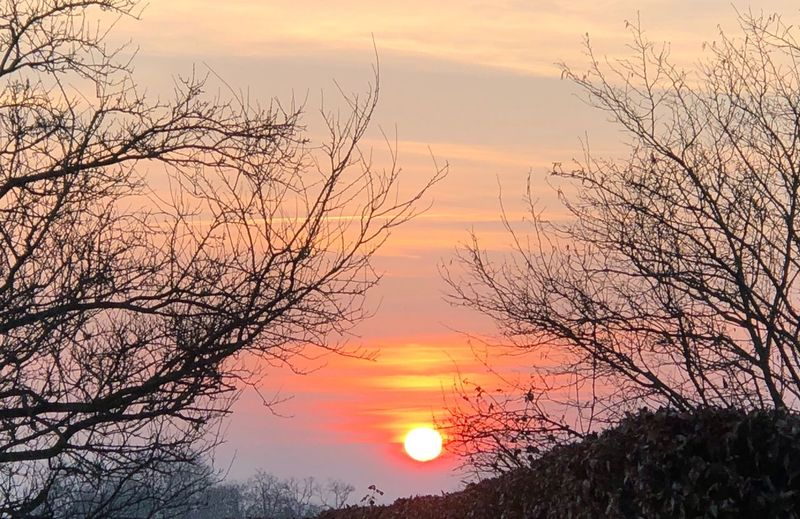 Sunset Orange Color Sun Beauty In Nature Sky Scenics Colour Your Horizn Nature Sunlight Tranquility Tranquil Scene Tree